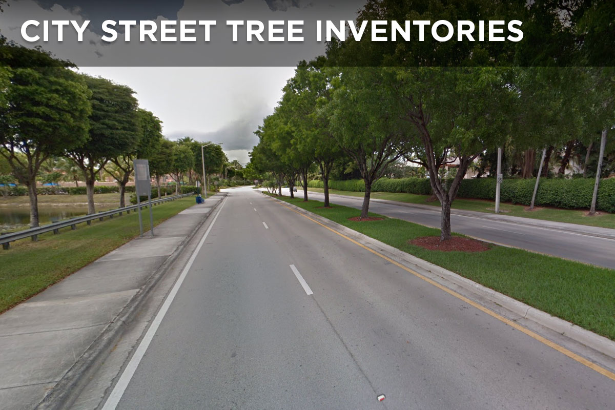 City Street Tree Inventories